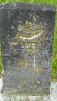 NEWTON, WILLIE P - Berkshire County, Massachusetts | WILLIE P NEWTON - Massachusetts Gravestone Photos