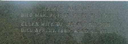 NILAND, ELLEN - Berkshire County, Massachusetts | ELLEN NILAND - Massachusetts Gravestone Photos